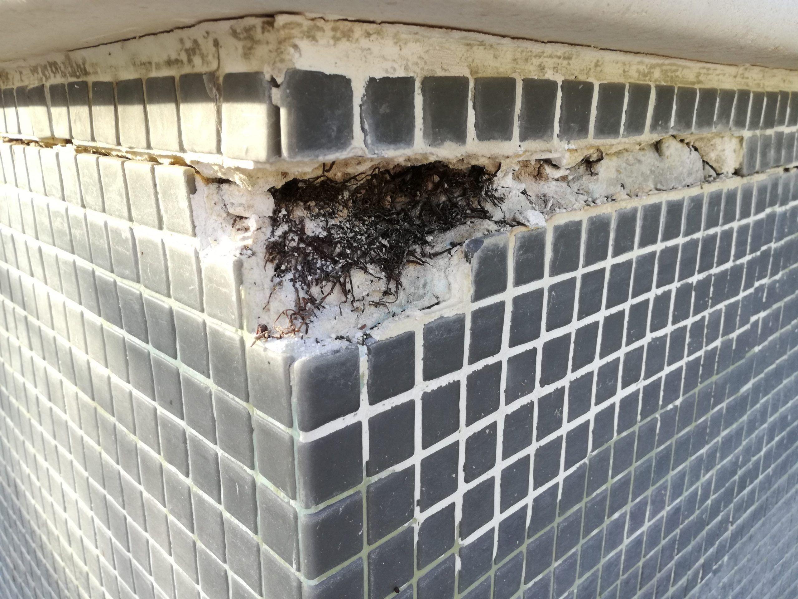Grieta en pared de piscina con gresite