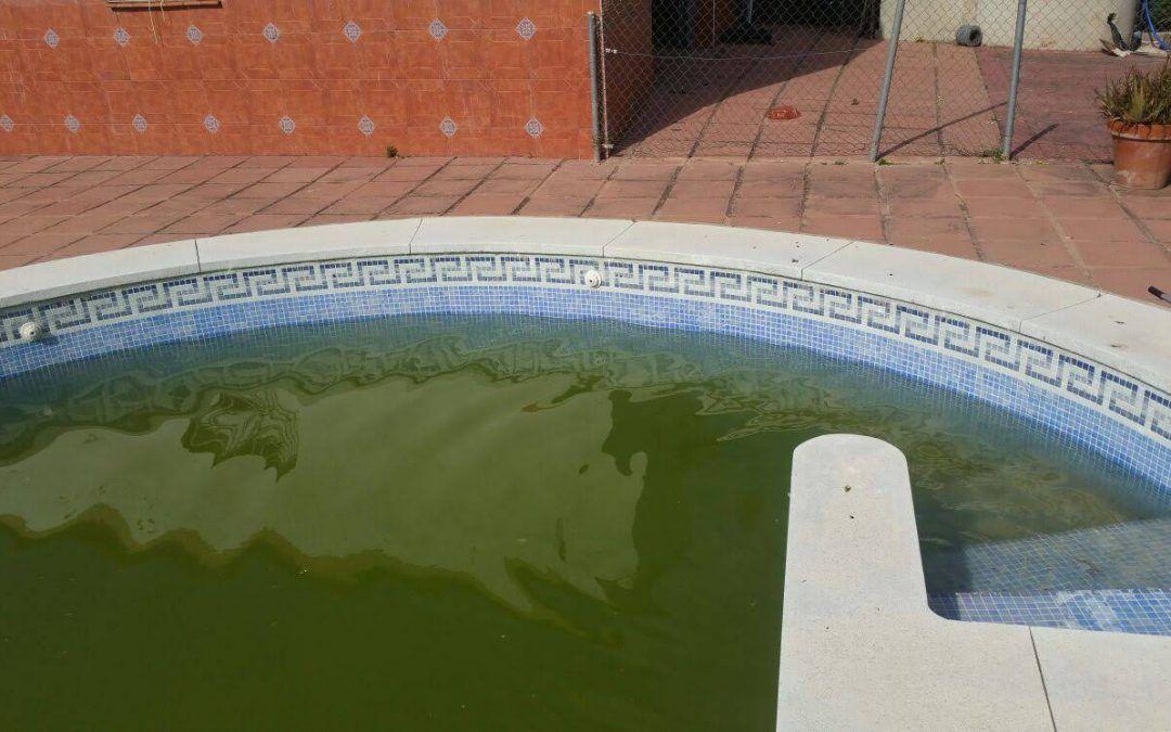 Recupera el agua verde de tu piscina